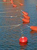 Yacht fixing buoys poster
