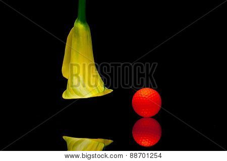Yellow Calla Lily And Golf Ball On A Black Glass Plate