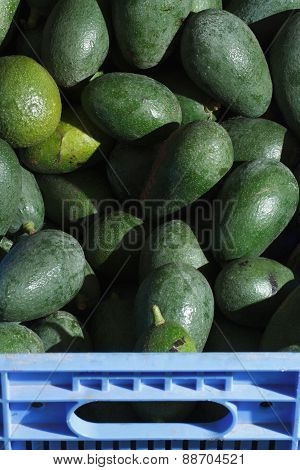 Ripe Avocados In A Box Close-up On The Market