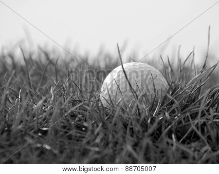 Golfball In Grass