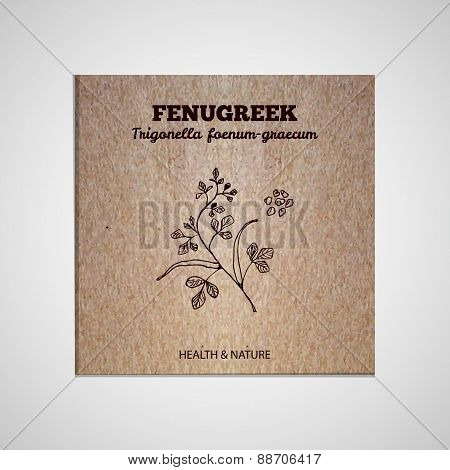 Herbs and Spices Collection - Fenugreek