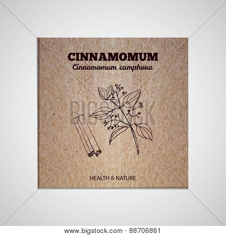 Herbs and Spices Collection - Cinnamomum