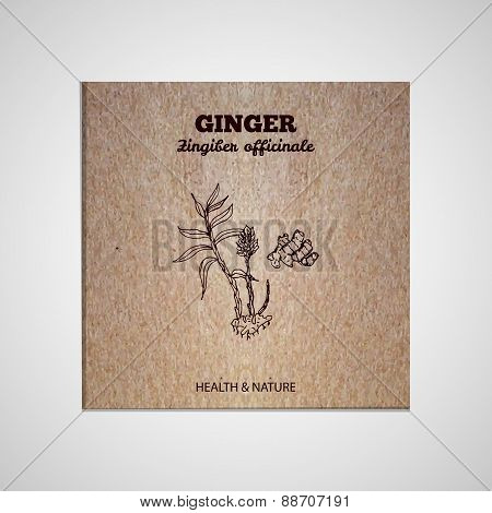 Herbs and Spices Collection -  Ginger