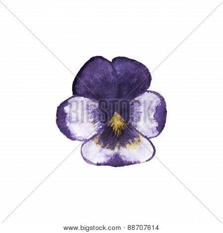 Watercolor pansy on the white background, aquarelle. Vector illustration.