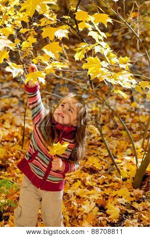 Little girl plucks leaves in autumn park