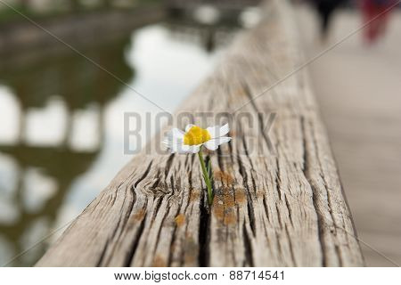 Young flower grows on a wooden surface