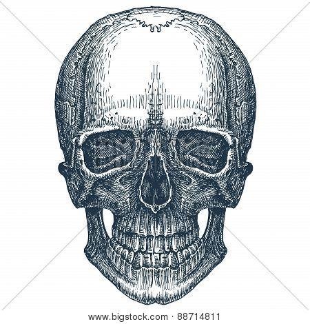 skull vector logo design template. fresh death, disease or Jolly Roger icon.