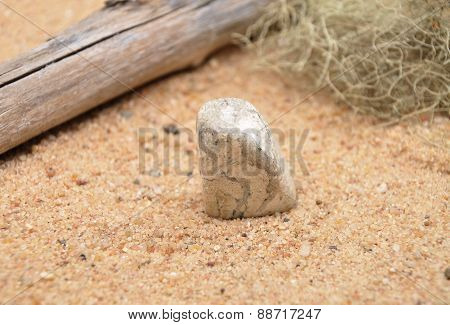 Jasper On Beach