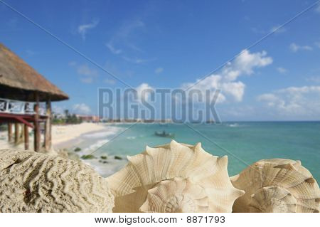 Sea Shells In Playa Del Carmen Quintana Roo