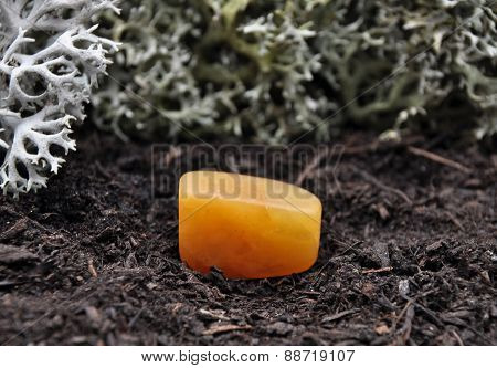 Orange Calcite On Forest Floor