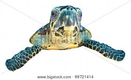 Sea Turtle isolated