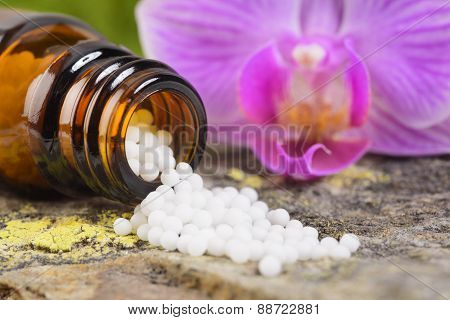alternative herbal and homeopathic medicine