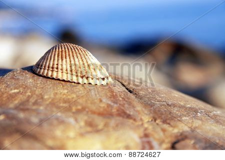 Sea Shell Laying On The Stone Near The Seashore