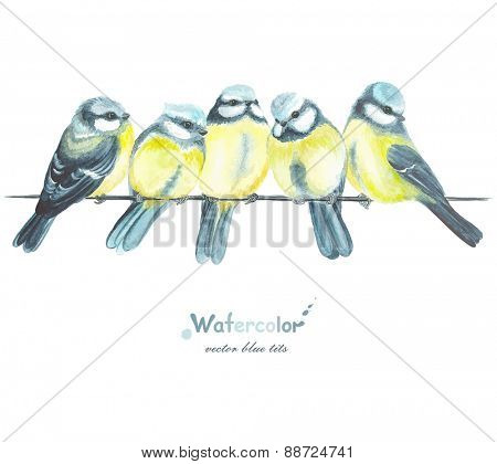 Five watercolor blue tits, vector illustration in vintage style.
