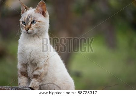 cunning feline