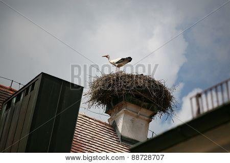 Stork In Stork Nest