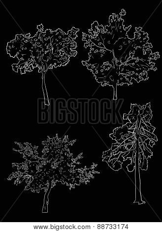 illustration with four tree sketches isolated on black background