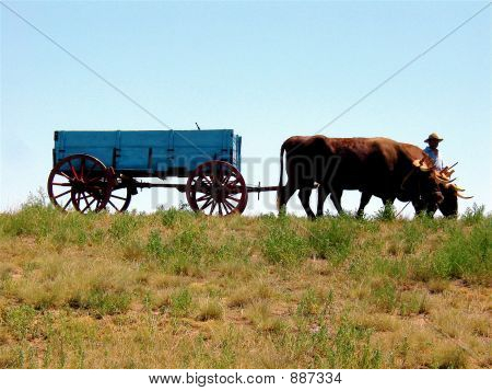 Oxen Pulling Wagon