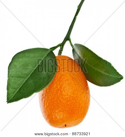 one kumquat citrus fruit with leaf close up isolated on white background