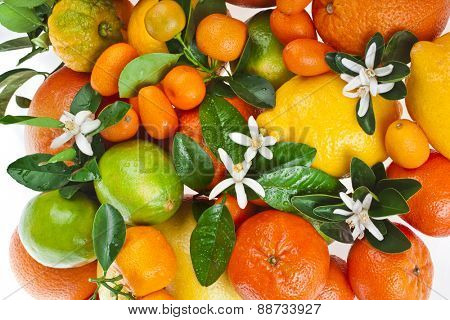 citrus fruits mixed top view texture  on white background