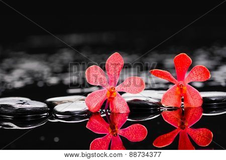 Spa still life with two red orchid with therapy stones