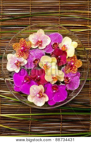 Bowl of colorful orchid with green plant on bamboo mat