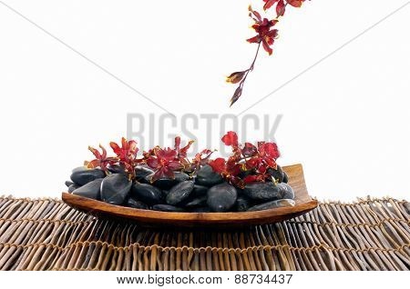 Red orchid with stones in wooden bowl on mat
