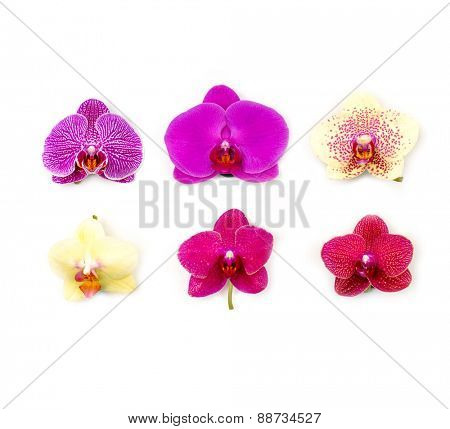 Beautiful six colorful orchid