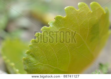 Features Of Plant Leaves