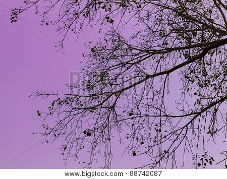 Branch And Leaves With Purple Sky For Background