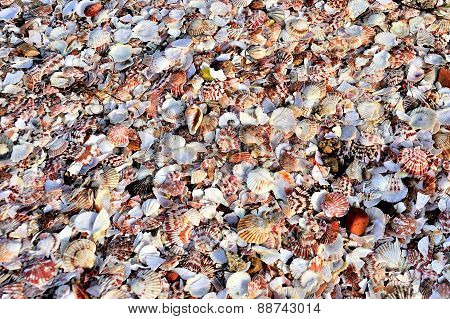 Shells Background