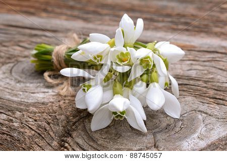Bouquet of spring flowers snowdrops
