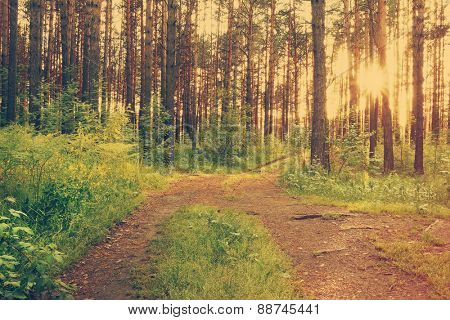 beautiful sunset in the woods, dirt road in the woods, retro film filtered, instagram style