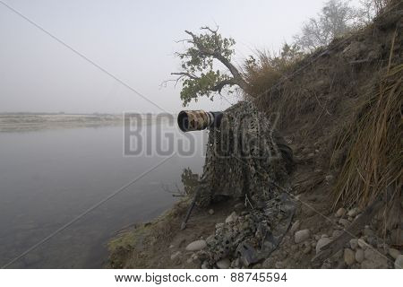look out in the edge of the river, Bardia, Nepal