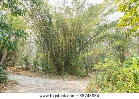 Big Bamboo Tree