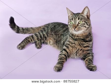 Tabby Cat With Green Eyes Lying On Purple