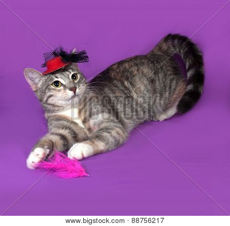 Tricolor Striped Cat Playing With Multicolor Feathers On Lilac