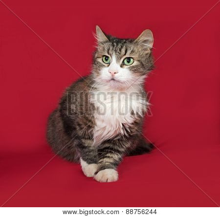 Fluffy Tabby And White Cat Sitting On Red