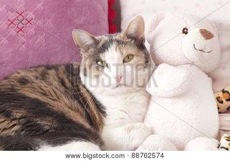 Cat and the peluche