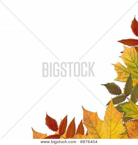 Autumn colored maple leaves frame