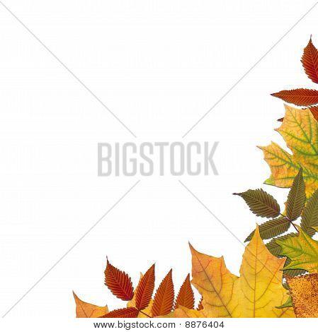 Farbige Herbstahorn geht frame
