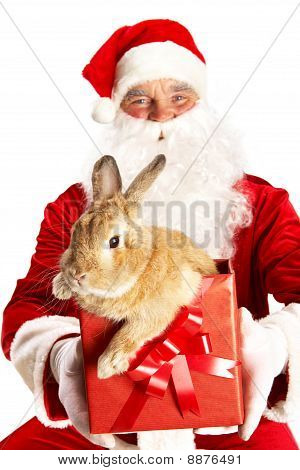 Santa With Cute Bunny