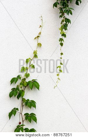 plant growing upwards and downwards. symbolic photo for expansion, rise, differences