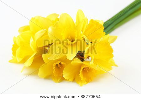 Beautiful bouquet of yellow daffodils isolated on white