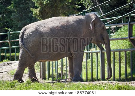 Elephant at the zoo