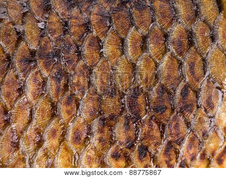 Golden fish scales background.