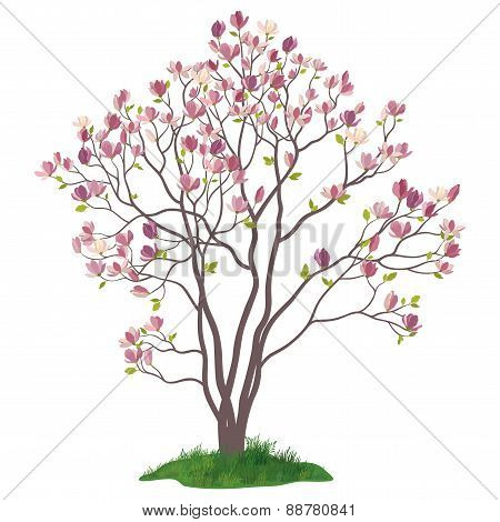 Magnolia Tree with Flowers and Grass