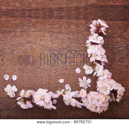 Wedding background. Flowering branch of cherry