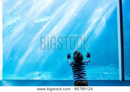 Young man touching a giant fish-tank at the aquarium
