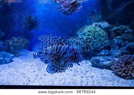 Fish swimming in a tank with coral at the aquarium